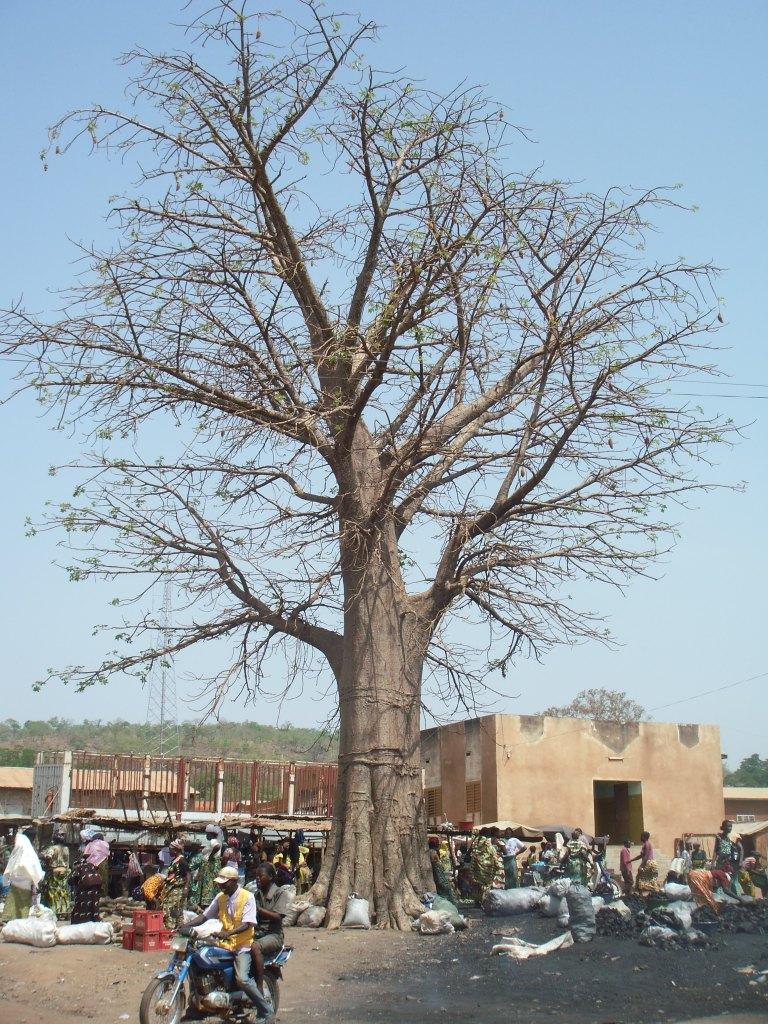 Benín 2011 129